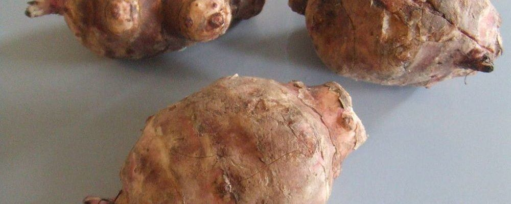 EAT YOUR PREBIOTICS – WHAT TO DO WITH JERUSALEM ARTICHOKE